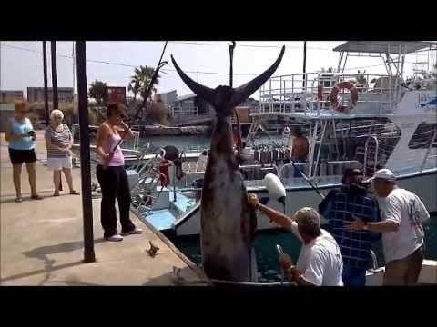 Jeff's Blue Marlin Beast of the Week Catch & Weigh-in aboard Camelot [Kona, Hawaii 03-22-12]